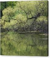 Reflecting Spring Green Canvas Print