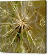 Reflecting The Golden Sunshine Of Love Canvas Print