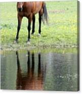 Reflecting Horse Near Water Canvas Print