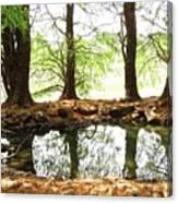 Reflecting Tree Trunks Canvas Print