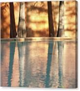 Reflecting Trees Canvas Print