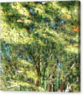 Reflecting Trees On Quiet Pond Canvas Print