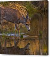 Reflection In The Stream Canvas Print