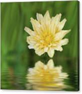 Reflection In Yellow Canvas Print