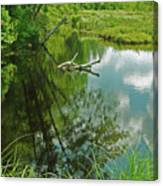 Reflection Of A Tree And Clouds Canvas Print