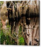 Reflection Of Cypress Knees Canvas Print