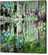 Reflection Of Cypress Trees Canvas Print