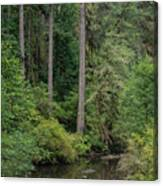 Reflections In Silver Falls State Park Canvas Print