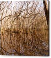 Reflections In The Swamp Canvas Print