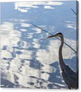 Reflections Of A Bird Canvas Print
