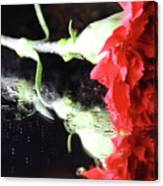 Reflections Of A Carnation Canvas Print