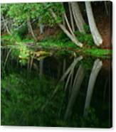 Reflections Of A Forest Canvas Print
