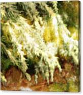 Reflections Of A Snow Canvas Print