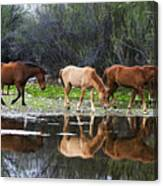 Reflections Of Wild Horses In The Salt River Canvas Print