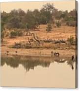 Reflections On Safari Canvas Print