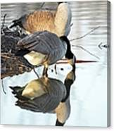 Reflective Geese Canvas Print