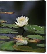 Reflective Lilly Canvas Print