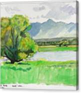 Refuge Tree Canvas Print