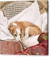 Regal Beagle Canvas Print