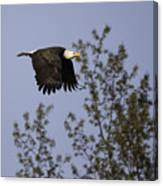 Regal Eagle Canvas Print