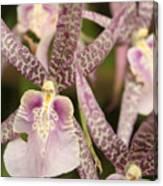 Regal Orchids Canvas Print