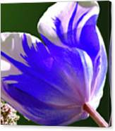 Reigning Tulips Canvas Print
