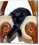 Relaxed Black Cat Sleeping Between Two Chairs Canvas Print