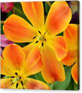 Relaxed Tulips Canvas Print