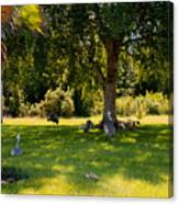 Relaxing In The Shade  Canvas Print
