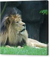 Relaxing Lion With A Thick Black Fur Mane Canvas Print