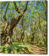 Relaxing Planes Trees Arbor Canvas Print