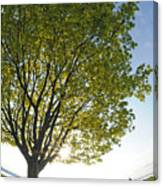 Relaxing Under A Tree Canvas Print