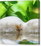 Reflected Little Stinger Taking A Sip 2 By Chris White Canvas Print