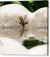 Reflected Little Stinger Taking A Sip By Chris White Canvas Print
