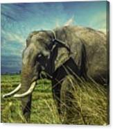 Remember Elephant Canvas Print
