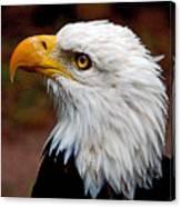 Reminiscent Bald Eagle Canvas Print