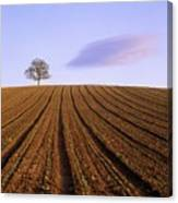 Remote Tree In A Ploughed Field Canvas Print