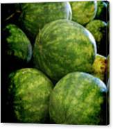 Renaissance Green Watermelon Canvas Print