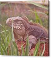 Reptile Land  Canvas Print