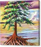 Resilient Cypress Canvas Print