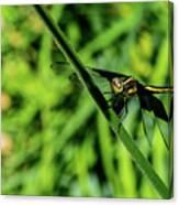Resting Alert Dragonfly Canvas Print