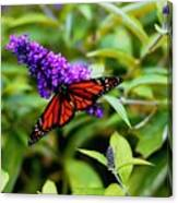 Resting Butterfly 2 Canvas Print