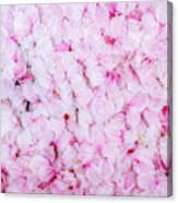 Resting Cherry Blossom Petals Canvas Print
