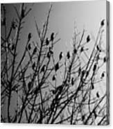 Resting Flock Bw Canvas Print
