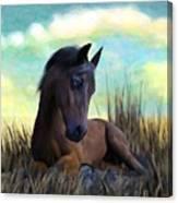 Resting Foal Canvas Print