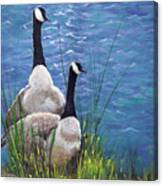 Resting Geese Canvas Print