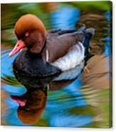 Resting In Pool Of Colors Canvas Print