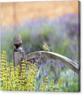 Resting In The Garden Canvas Print