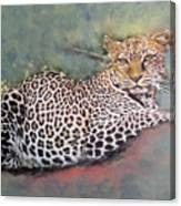 Resting Leopard Canvas Print