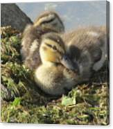 Resting On The Lake Shore. Canvas Print